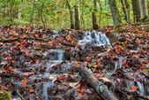 Idyllic Autumn Forrest — Stockfoto