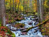 Enchanted Autumn Forrest Creek — Stock Photo