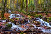 Enchanted Autumn Forrest Creek — Stock Photo