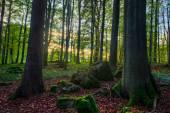 Lovely Autumn — Zdjęcie stockowe