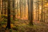 Black Forest — Stock Photo