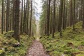 Forest in Berchtesgaden — Stock Photo