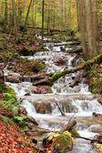 Idyllic Autumn Forest — Stock Photo