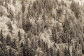 Winter Black Forest — Foto de Stock