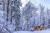 Blue Winter Forest — Stockfoto