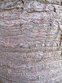 Texturou kůry stromu — Stock fotografie