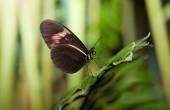 Postman Butterfly — Stock Photo