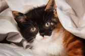 Kitten on bed — ストック写真