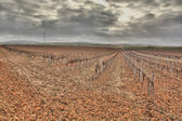 Autumn vineyard field after the harvest  — Stock Photo
