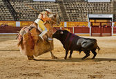 Bull pushing — Stock Photo