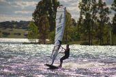 Windsurf and eucalyptus tree — Stock Photo