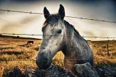 Horse head behind the fence — Stock Photo