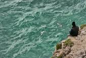Fisherman in Cape Saint Vicent  — Stock Photo