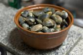 Fresh raw manila clams — Stock Photo