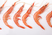 Row of spanish rice shrimps — Stock Photo