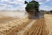Harvesting barley — Stock Photo