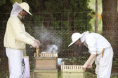 Beekeeper at work with bees — Zdjęcie stockowe