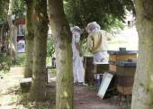 Beekeepers in the Forest — Foto Stock