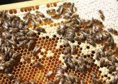 Hive on honeycomb — Foto Stock
