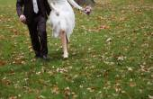 Bride and groom running on grass — Stock Photo