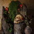 Still life with a human skull with desert plants, cactus, roses — Stock Photo #53211113