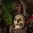 Still life with a human skull with desert plants, cactus, roses — Stock Photo #53211475