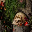 Still life with a human skull with desert plants, cactus, roses — Stock Photo #53211643