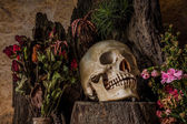 Still life with a human skull with desert plants, cactus, roses  — Stock Photo