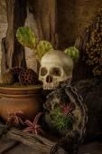 Natureza morta com um crânio humano com plantas de deserto. — Foto Stock