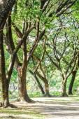 высокие деревья в лесу весной. — Стоковое фото