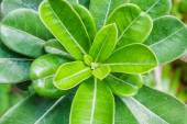 Many small bright green leaves — Stock Photo