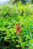 Closeup yellow crested lizard — Stock Photo