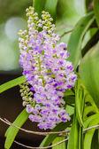 Beautiful bouquet of purple orchids — Stock Photo