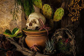 Still life with a human skull with desert plants. — Stock Photo