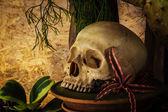 натюрморт с человеческий череп с пустынных растений. — Стоковое фото