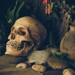 Still life with a human skull with desert plants, cactus, roses  — Stock Photo #61617921