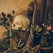 Still life with a human skull with desert plants, cactus, roses  — Stock Photo #64063213
