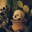 Still life with a human skull with desert plants, cactus, roses  — Stock Photo #64063731
