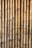 Bamboo wall nature background — Stock Photo