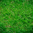 Natural background - green grass texture — Stock Photo #77598740