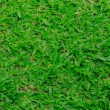 Natural background - green grass texture — Stock Photo #77598742