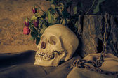Still life with a human skull with a red rose. — Stock Photo