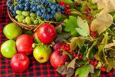 Sonbaharda hasat — Stok fotoğraf