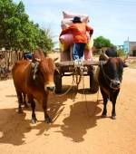 Wagon, transport at Vietnam countryside — Stock Photo