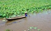 Vietnamese village, row boat, lotus flower, lotus pond — Stock Photo