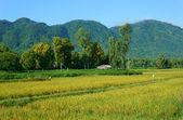 Vietnamese village, mountain, house, paddy field — Stock Photo