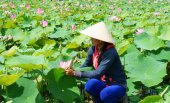 Vietnamese village, row boat, lotus flower, lotus pond — Stockfoto