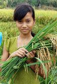 Asia children, rice field — Stock Photo