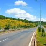 Dalat highway, pine forest — Stock Photo #68667799