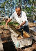 Apicultura de Asia, Vietnam apicultor, colmena — Foto de Stock